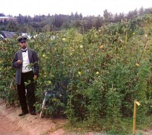 soxumis botanikuri